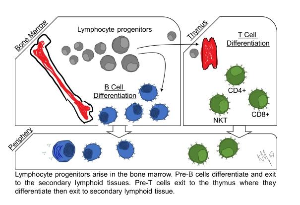 lymph progen