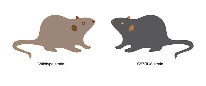 wild_lab_mice